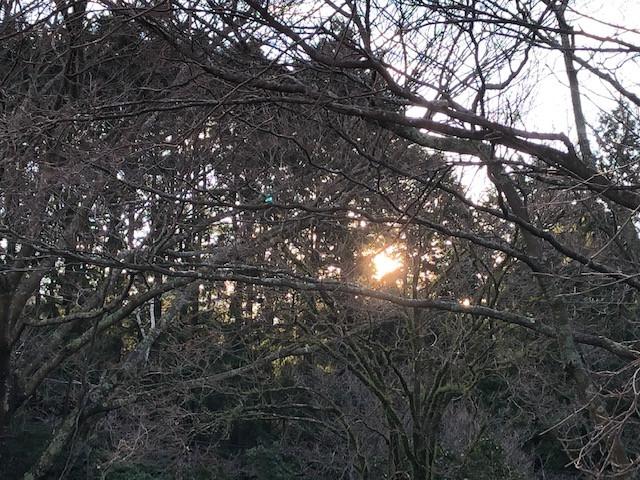 温泉と日の出